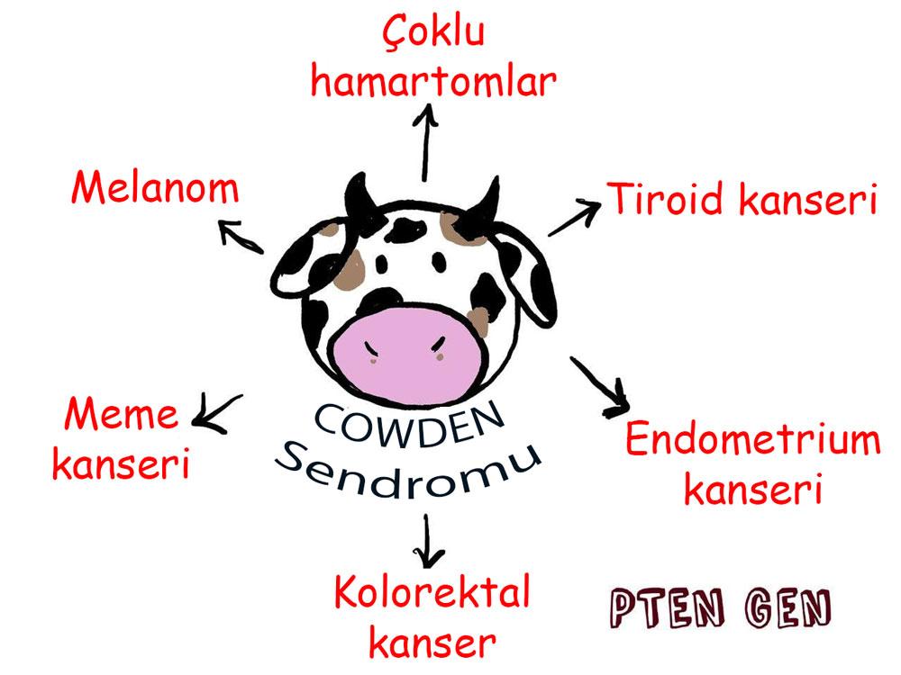 cowden sendromu nedir belirtileri pten gen mutasyonu kanserlerle ilişkisi