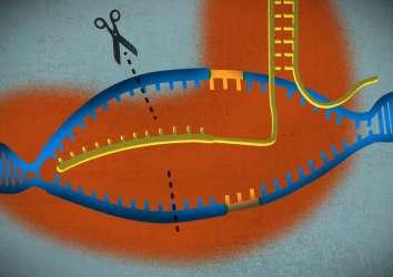 Müjdeli haber: CRISPR ile ilk kez talasemi ve orak hücre anemisi hastaları tedavi edilmeye başlandı
