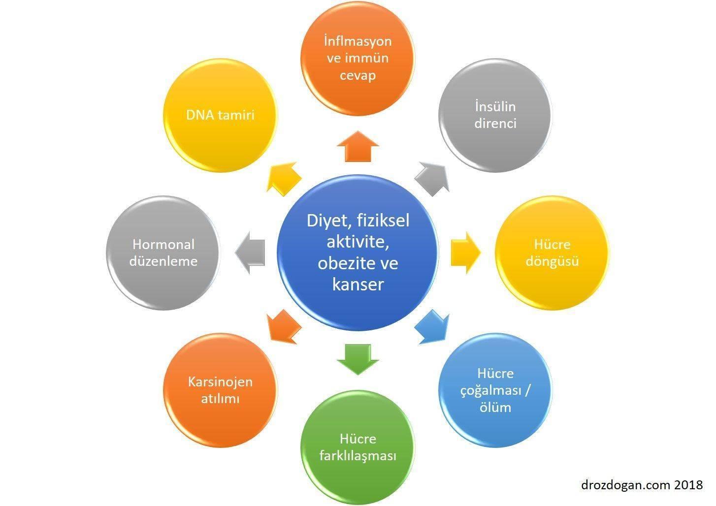 diyet beslenme fiziksel aktivite ve obezitenin kanser riskini etkileyen biyolojik mekanizmaları