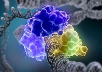 DNA'yı doğal hasarlardan koruyan bir mekanizma keşfedildi