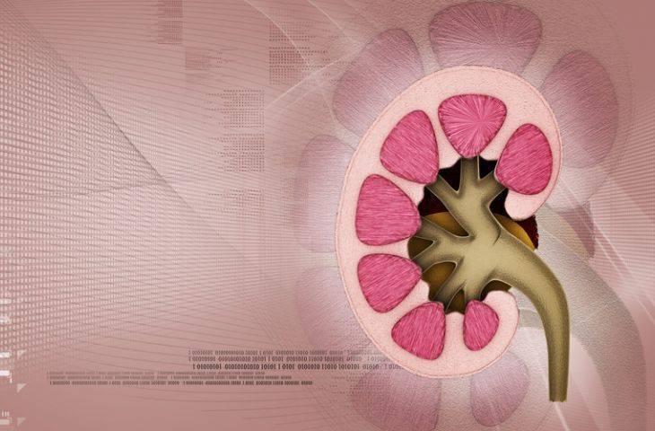 4. evre böbrek kanseri 1. basamak tedavisinde cabozantinib FDA onayı aldı
