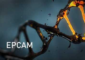 EPCAM mutasyonu nedir? Hangi kanserlerin riskini artırır?