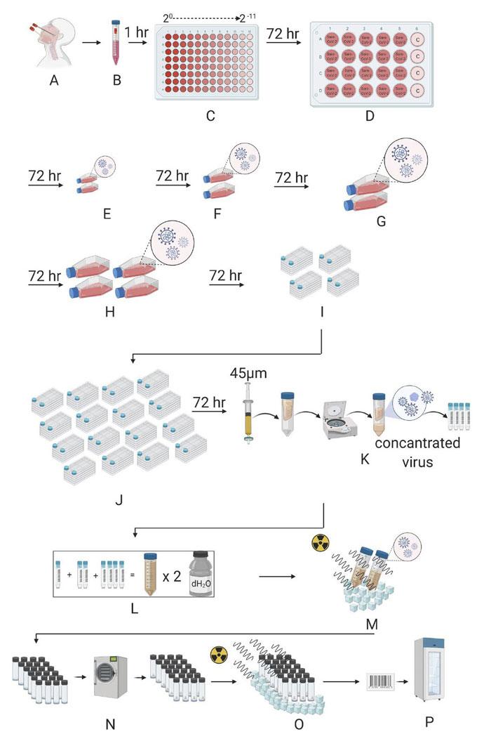 ercüment ovalı koronavirüs aşısı hazırlama süreci