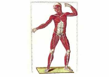 Eustachi'nin Kurtarılmış Başyapıtları 1552 – Anatomide doğruluk devri başlıyor