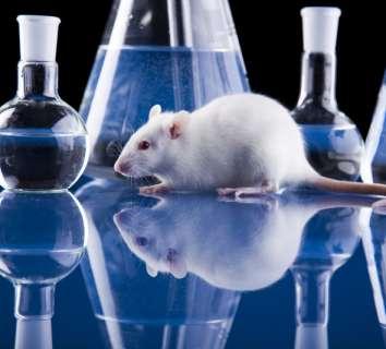 On yıllar boyunca farelerde kanseri tedavi ettik, ama bu insanlarda işe yaramadı