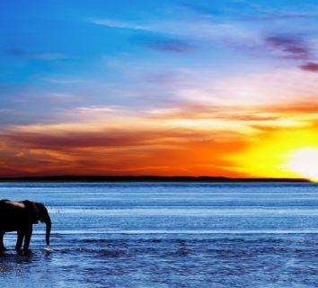 Filleri kansere karşı koruyan Zombi Genler keşfedildi