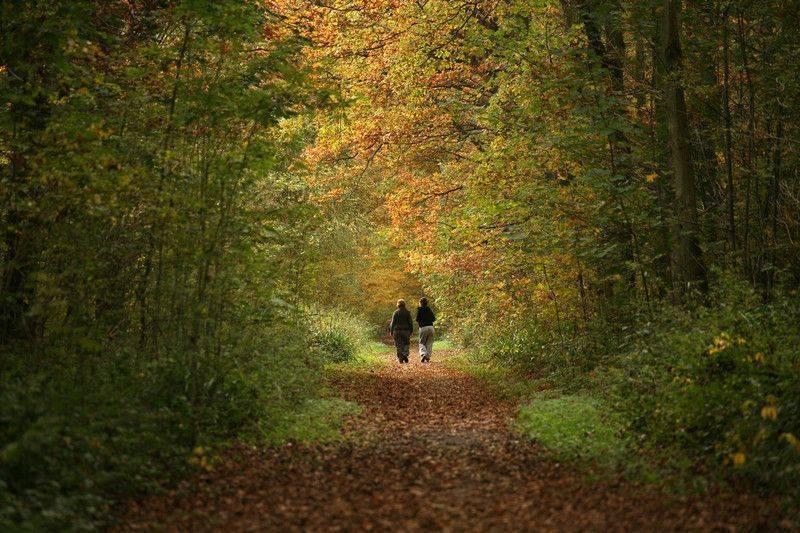 hafif orta tempolu düzenli yürüyüşün egzersiz ile tedavi için en kolay uygulanabilir seçene