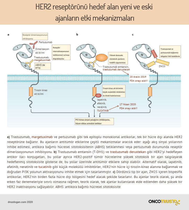 her2 pozitif kanserlerde hedefli ilaclarin etki mekanizmalari tucatinib margetuximab deruxtecan (1)