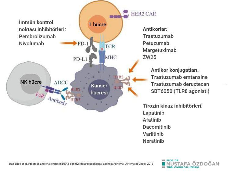 her2 pozitif mide kanserinde hedefler ve antikanser ilaclar