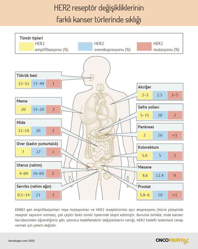 her2 reseptor degisikliklerinin farkli kanser turlerinde sikligi