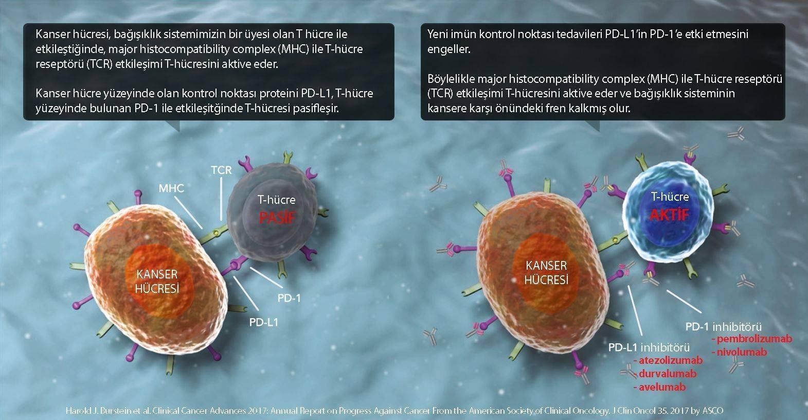 imfinzi durvalumab etki mekanizması kanser tedavisinde immünoterapi
