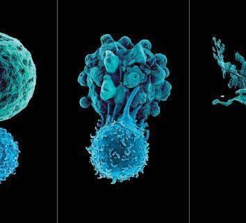 İmmün sistem (bağışıklık sistemi) nedir, nasıl çalışır? Vücudun savunma mekanizması