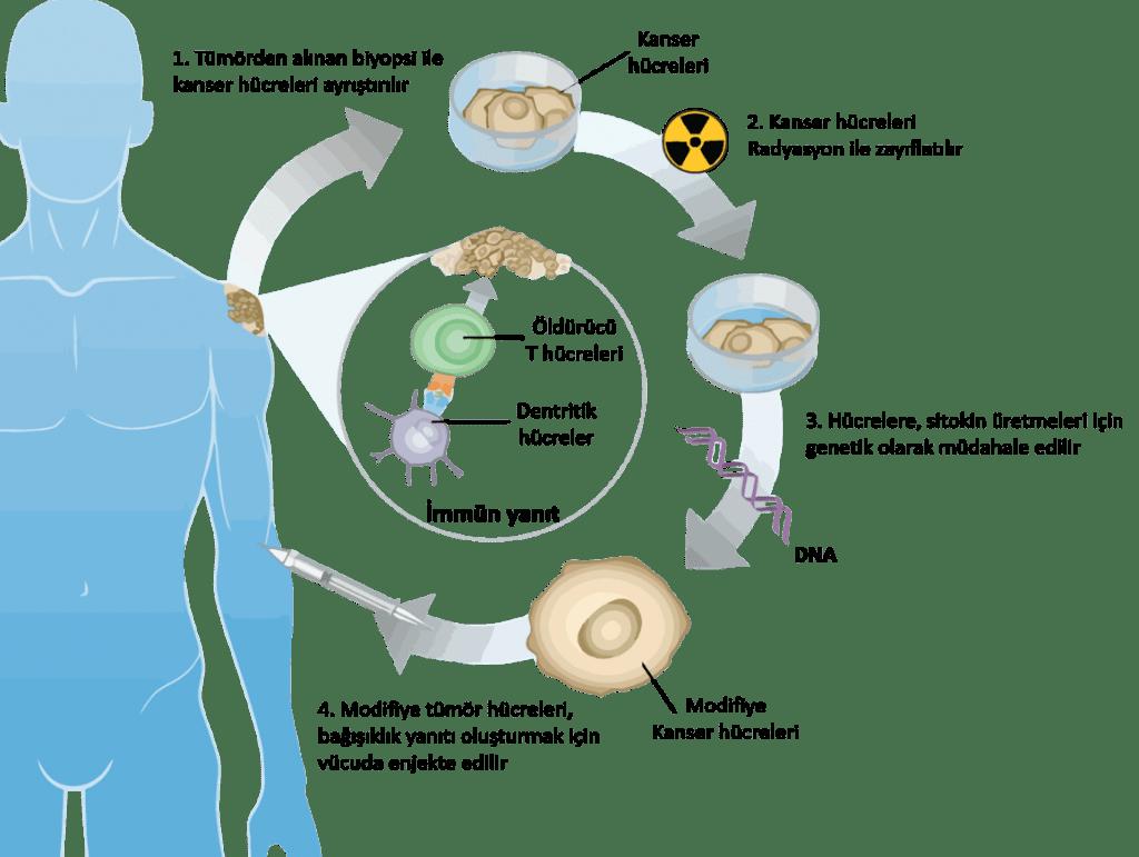immunoterapi