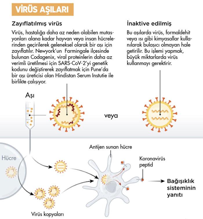 inaktif ve zayıflatılmış koronavirüs covid 19 aşılarının etki mekanizması sinovac