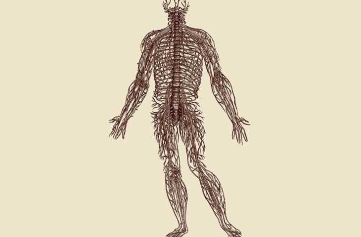 İnsan Vücudunun Yapısı Üzerine 1543 – Vesalius ile anatominin mükemmelleşmesi