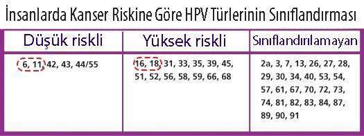 kanser riski açısından HPV türlerinin sınıflandırması yüksek ve düşük riskli