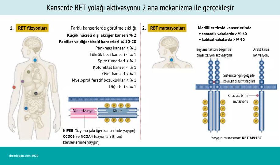 kanserde ret aktivasyonu mutasyonu akciger ve tiroid kanseri