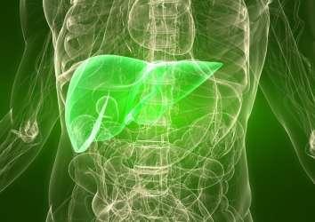 Karaciğer kanseri tedavisinde ikili immünoterapi FDA onayı aldı