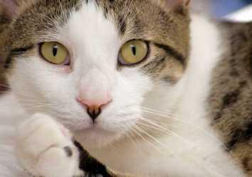 Kedinizin miyavlaması epilepsi nöbeti dedektörü olabilir mi?