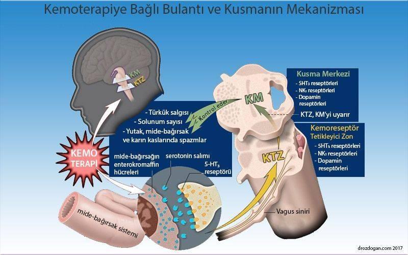 kemoetarpiye bağlı bulantı ve kusma neden olur mekanizması