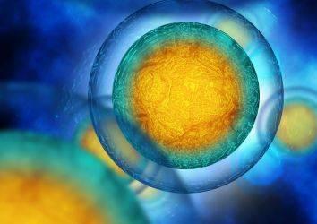 Kemoterapi sonrası doğurganlığın korunması için yeni bir mekanizma bulundu