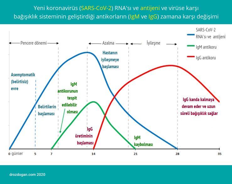 koronaviruse karsi gelisen antikorlar igm igg sars cov 2