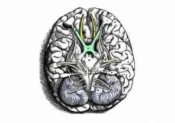 Kranial sinirler 1664 – Beyin üzerine anıtsal bir çalışma