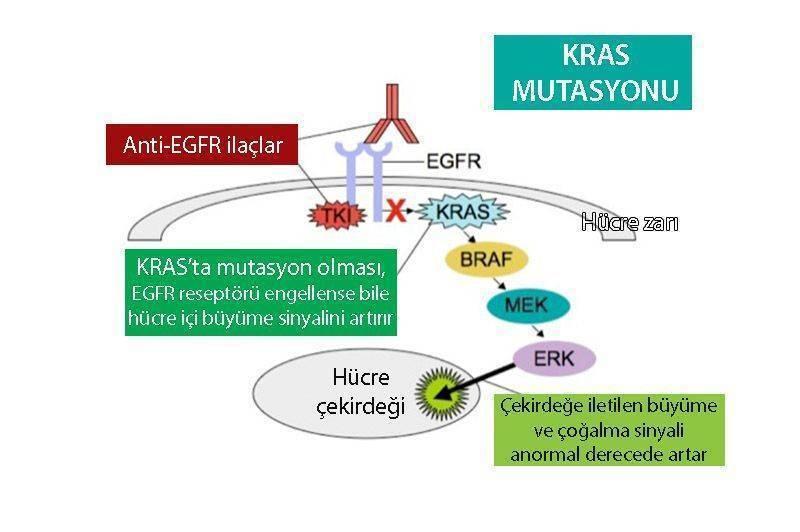 kras mutasyonu kras wild nras mutasyonu kolon kanseri tedavisinde onemi nras