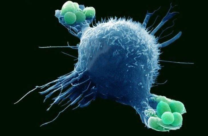 Makrofaj nedir? Çeşitleri, görevleri? Kanser için dost mu düşman mı?