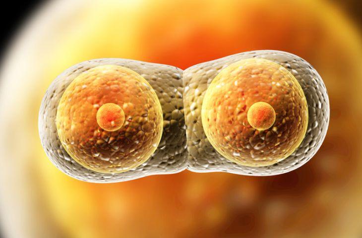 Tetikleyici mutasyonların, bir hastanın tüm metastazlarında aynı olduğunun keşfedilmesi şaşırttı