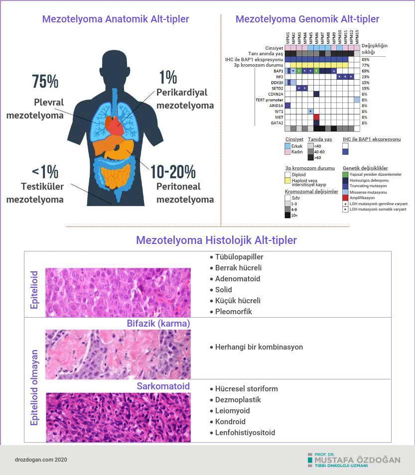 mezotelyoma cesitleri nedir anatomik histolojik genomik alt tipleri