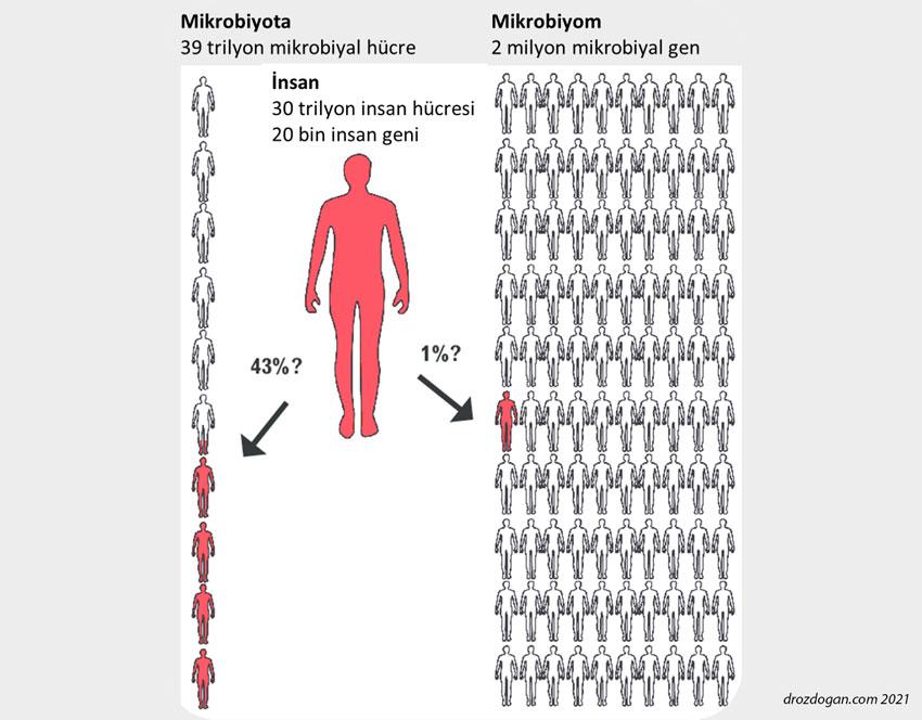 mikrobiyota ve mikrobiyom nedir farkları nelerdir