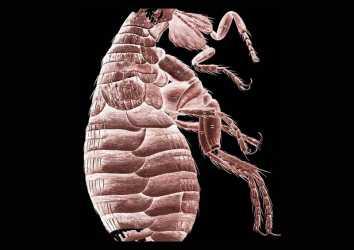 Mikrografi 1665 – Robert Hooke mikroskop ile dünya tarihine iz bırakıyor