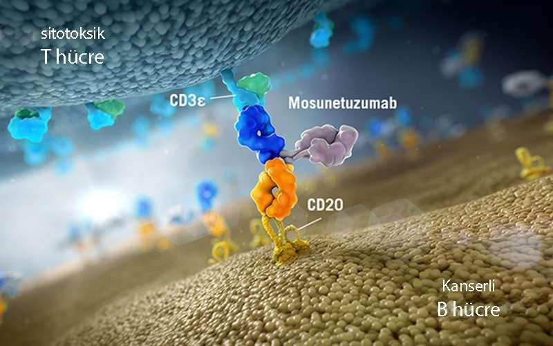 mosunetuzumab bisipesifik antikor etki emkanizması