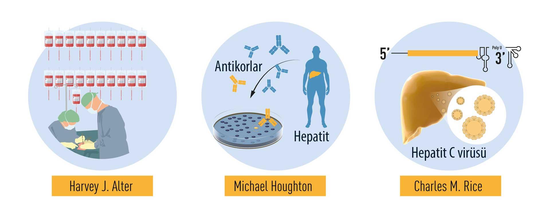 Nobel Tıp Ödülü 2020 Hepatit C keşfi harvey alter michael houghton charles rice ne buldu