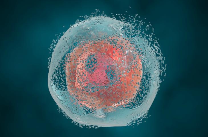 Ölü kanser hücrelerini, bağışıklık sistemini kansere karşı aktifleştirmek için kullanmak