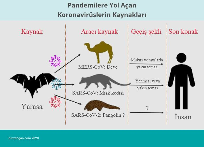 pandemilere yol acan koronavirüs çeşitleri kaynak aracı konak mers sars covid