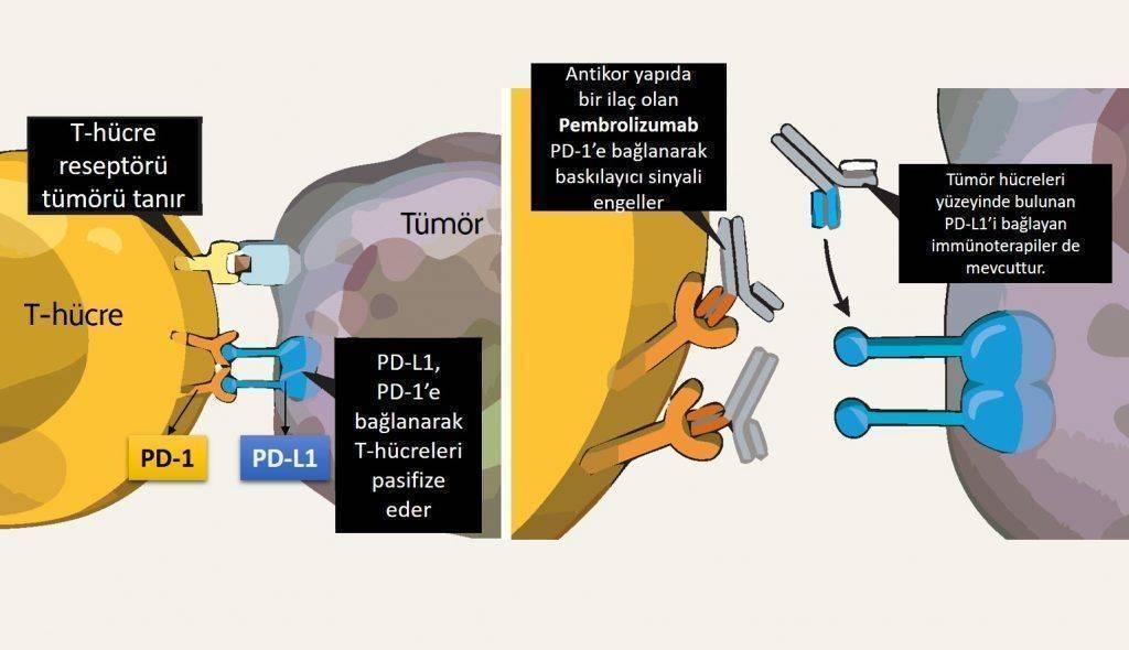 pembrolizumab_keyturda_immunoterapi_4_evre_akciger_kanseri_birinci_tedavisinde_fda_onay_aldi 1024x5