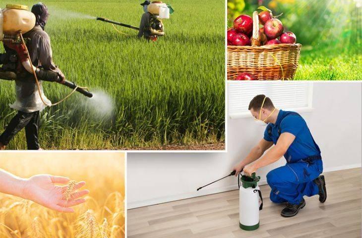 Pestisit nedir? Sağlığa zararlı mıdır, kanser riski oluşturur mu?