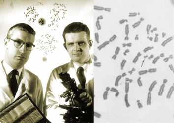 Philadelphia Kromozomu: Akıllı kanser ilaçlarına giden 50 yıllık bir yol