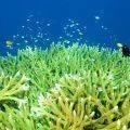 Plankton nedir? Bitkisel plankton sağlığa yararlı mıdır? Kanser tedavisinde yeri var mı?