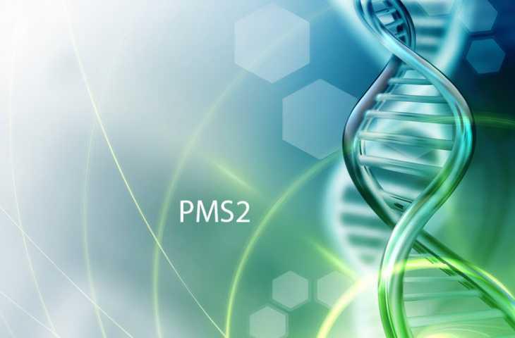 PMS2 mutasyonu nedir? Hangi kanserin riskini artırır?