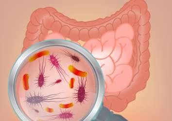 Probiyotik – sağlığa yararları, gerçekler ve güncel bilimsel araştırmalar