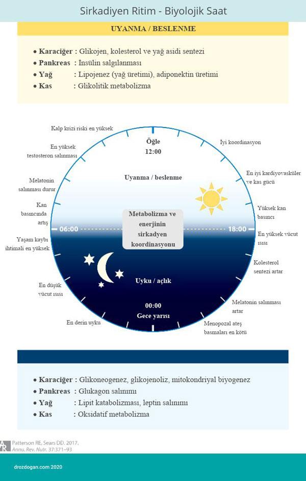 sirkadiyen ritim biyolojik saat