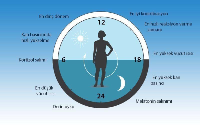 sirkadiyen saat fizyolojimizi birçok yönden etkiler