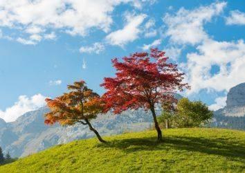 Erlotinib akıllı ilacı ile akciğer kanseri tedavisi