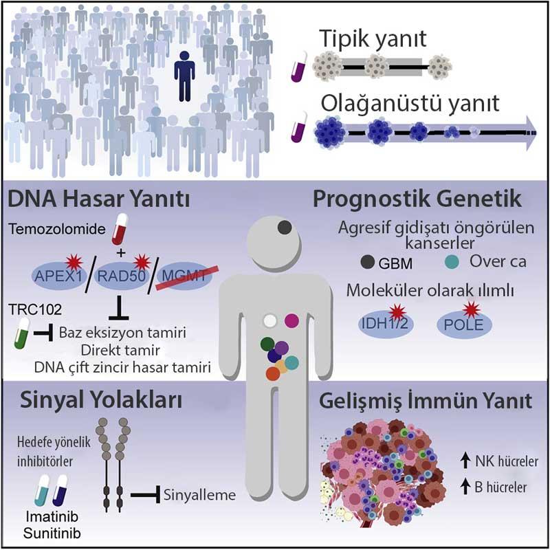 Tedaviye olağanüstü yanıtlar yeren kanserlerin moleküler özellikleri cancer cell grafik özet