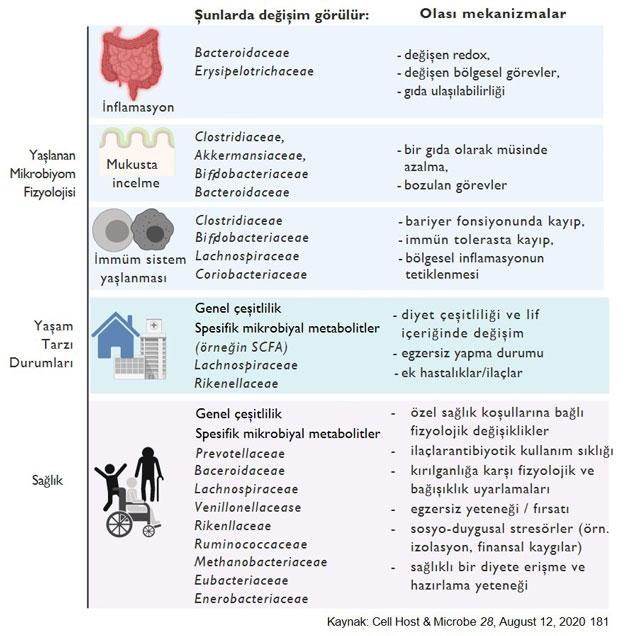 Yaşlanan mikrobiyotada değişiklikler mikrobiyomdaki yaşa bağlı değişiklikler fizyolojik ya�