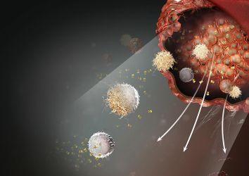 Yeni bir kanser immünoterapisi geliyor: makrofaj kontrol noktalarını baskılamak